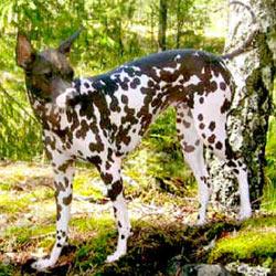 Uncommon Dog Breeds U S