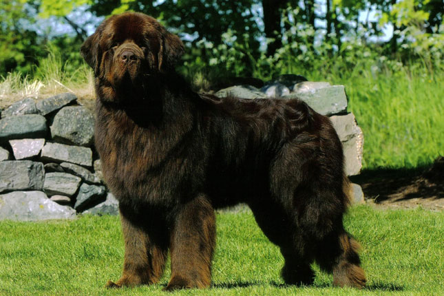 Newfoundland